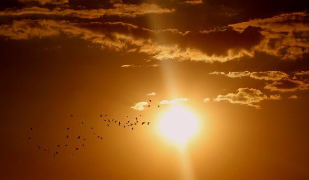 thousand splendid suns summary sample