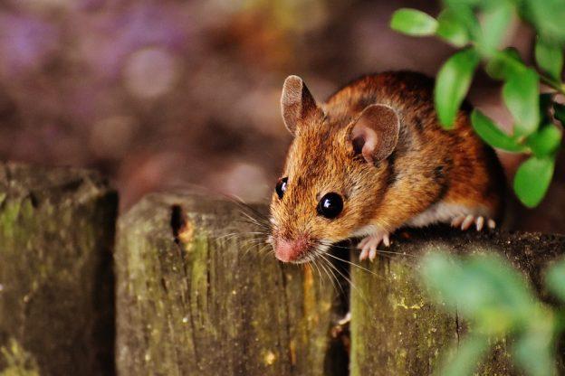 Of Mice and Men Topics